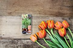 Cell Phone with garden scene and Tulips. Overhead shot of a cell phone with a garden scene and a bouquet of orange and yellow tulips over a wood table. Flat lay Stock Images