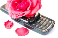 Cell phone and rose Stock Image