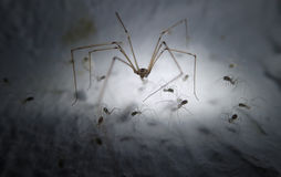 Cell spider and babies Stock Photos