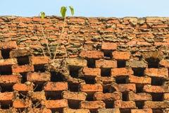 Cell- tegelstenvägg med liten växttextur Forntida cell- b Royaltyfri Fotografi