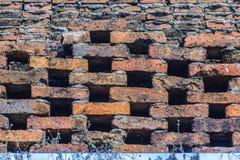 Cell- tegelstenvägg med liten växttextur Forntida cell- b Fotografering för Bildbyråer