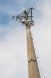 cell- torn Fotografering för Bildbyråer