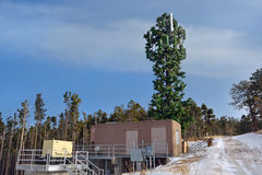 Cell Tower Disguised as a Tree.  Stock Photography