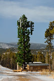 Cell Tower Disguised as a Tree. In Winter Stock Photos