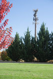 Cell tower by park. Stock Photo