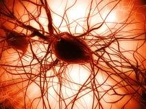 Cella di nervo illustrazione vettoriale