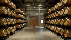 A Cellar of Casks Aging Cabernet. Aging wine in French and American Oak barrels is cellared in a cool humidity rich environment for many years to obtained the Royalty Free Stock Photo