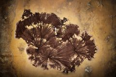 Cellar fungus mycelium on wall. Coniophora puteana , fungal decay resulted from dampness Royalty Free Stock Photos