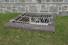 Cellar security grill. Royalty Free Stock Photo