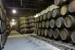 Cellar with wine wooden barrels Royalty Free Stock Images