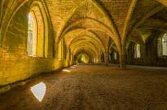 Cellarium Images stock