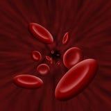 Celle della piastrina che attraversano circolazione sanguigna Fotografie Stock