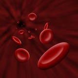 Celle della piastrina che attraversano circolazione sanguigna Fotografia Stock
