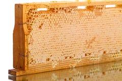 Cellen van de bijenkorf met honing stock afbeelding