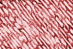 Celler av löken Royaltyfria Foton
