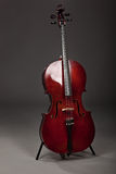 Cello. Musical instrument cello on a gray background stock image