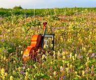 Cello in der Wiese Lizenzfreies Stockbild
