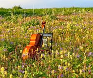 Cello in the meadow Royalty Free Stock Image