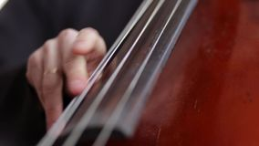 Cello. Musician play on cello stock video footage