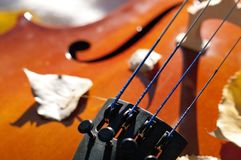 Cello outdoors closeup in the park on fall autumn day with colourful leaves stock photography