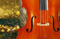 Cello outdoors closeup in the park in fall autumn day with colourful leaves. Cello outdoors in the park in fall autumn day with colourful leaves. Calgary stock photos