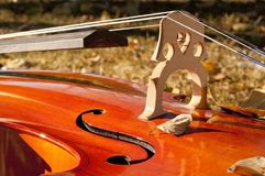 Cello outdoors closeup in the park on fall autumn day with colourful leaves. Calgary, Alberta, Canada royalty free stock photos