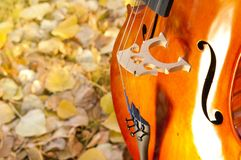 Cello outdoors in the park in fall autumn day with colourful lea. Ves. Calgary, Alberta, Canada stock images
