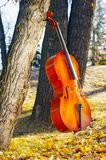 Cello outdoors in the park in fall autumn day with colourful lea. Ves. Calgary, Alberta, Canada stock photography