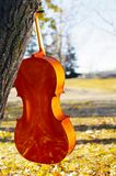 Cello outdoors in the park in fall autumn day with colourful lea. Ves. Calgary, Alberta, Canada royalty free stock images