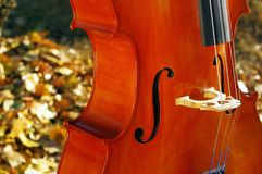 Cello outdoors closeup in the park in fall autumn day with colourful leaves. Cello outdoors in the park in fall autumn day with colourful leaves. Calgary royalty free stock photo