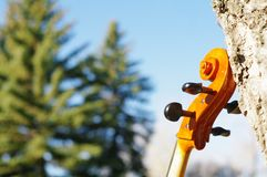 Cello scroll outdoors in the park on fall autumn day with colour stock photos