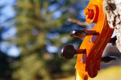 Cello scroll outdoors in the park on fall autumn day with colour royalty free stock images