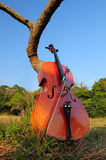 Cello stringed musical instrument Stock Image