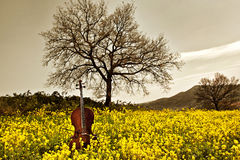 Cello in the yellow. Rural and idyllic scene: a cello with bow standing up in a flowers field. Two trees and a hill on the background.  Grey sky Stock Image