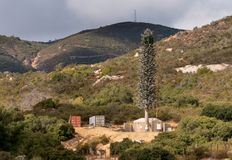 Cellphone Mobile Transmission Tower Disguised As A Fir Tree In California Royalty Free Stock Images