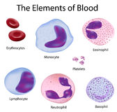 The cells of blood. The cells of the blood depicted with scientific accuracy, eps 8, gradient and mesh printing compatible Royalty Free Stock Photography