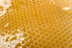 Cells for honey Royalty Free Stock Photography