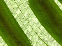 Cells of leaf Stock Image