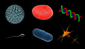 Cells Of Life. Cell of virus, blood cell, dna, sperm cell, bacterium cell, nerve cell Royalty Free Stock Photo