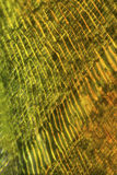 Cells of a moss leaf in a polarization micrograph. Cells of moss leaves form an abstract pattern in a polarization micrograph at 100X Stock Images