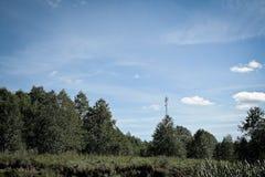 Celltorn i skogen Arkivfoton