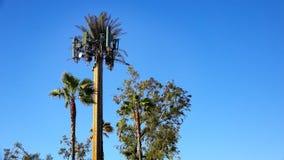 Celltorn som kamoufleras som palmträdet Arkivbilder