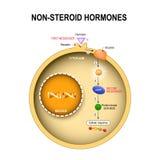 Cellula animale con il nucleo, citoplasma, DNA, enzime, chinasi proteica illustrazione di stock