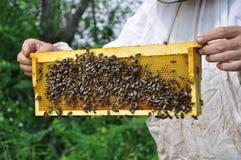 Cellula di tenuta dell'apicoltore con le api ed il miele Immagini Stock Libere da Diritti