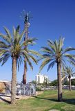 Cellular antenna disguised as a palm tree Stock Photography