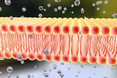 Cellular membrane with diffusion of molecules Stock Image