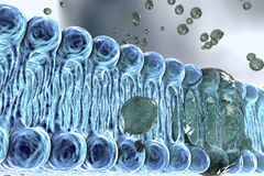 Cellular membrane with diffusion of molecules Royalty Free Stock Images