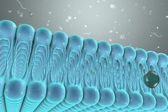 Cellular membrane with diffusion of molecules Royalty Free Stock Photos