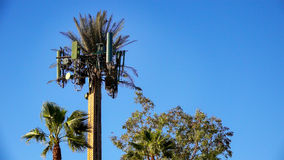 Cellular Tower Camouflaged As A Tree Royalty Free Stock Images