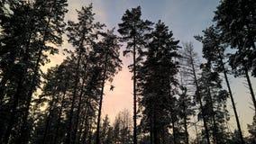 Cellulare di lumia 640xl della foresta di inverno di sera Fotografia Stock